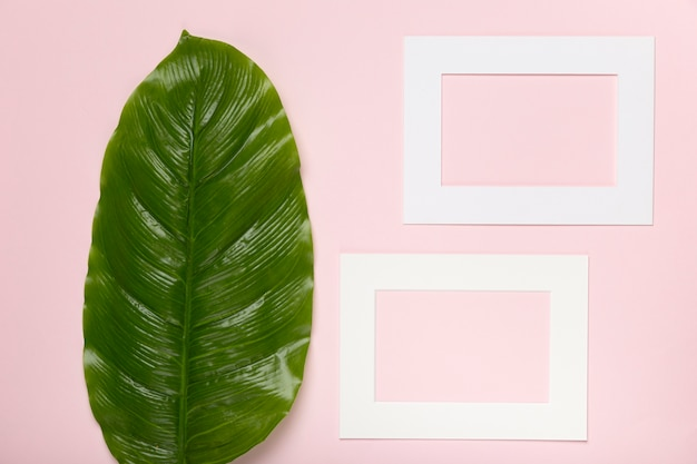 Top view green leaves next to rectangle paper shape Free Photo