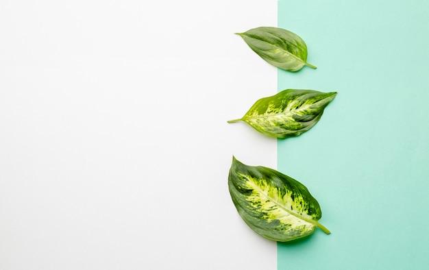 コピースペースのある上面図の緑の葉 無料写真