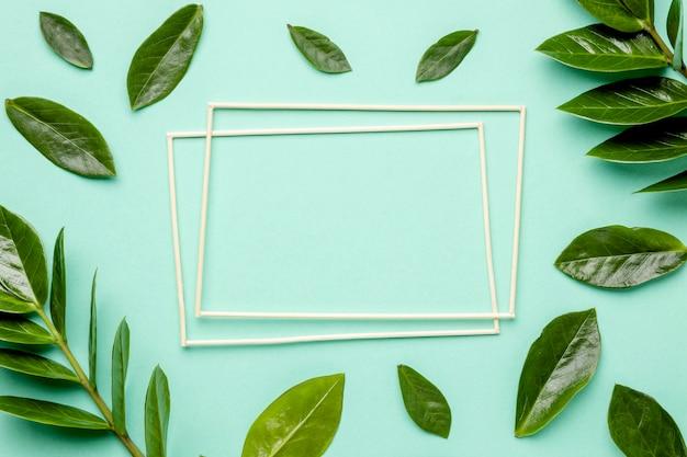フレーム付きの上面図緑の葉 無料写真
