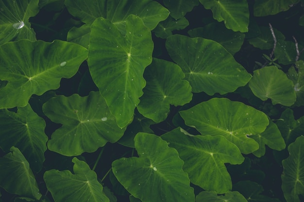Top view of green plants Free Photo