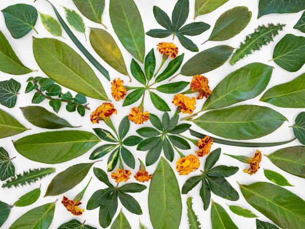 緑の葉と花のトップビューグループ 無料写真
