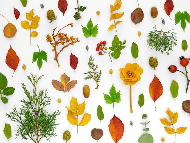 花と緑の葉の上面図グループ 無料写真