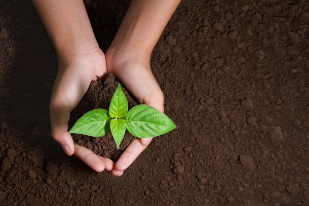 Top view hand holding young tree for planting in garden Premium Photo