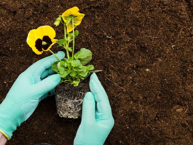 植物を操作するトップビュー手 無料写真