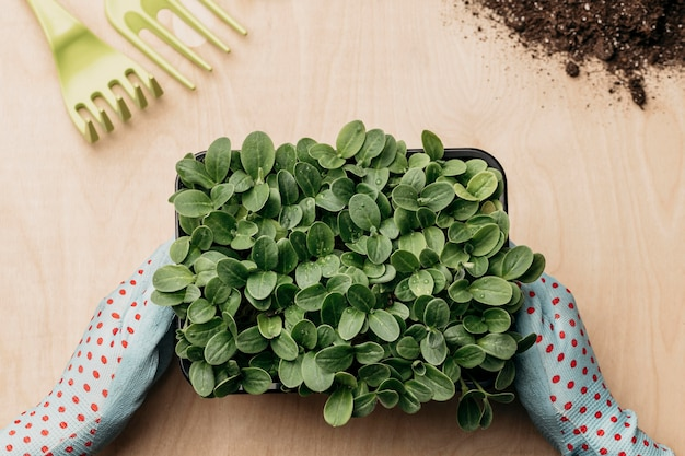 Top view of hands with gloves holding greenery Premium Photo