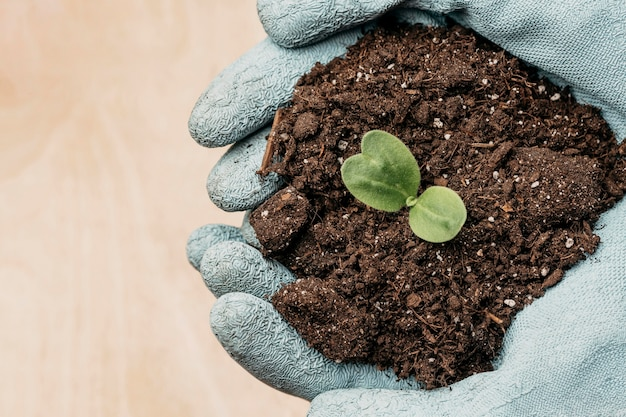 Top view of hands with gloves holding soil and plant with copy space Free Photo