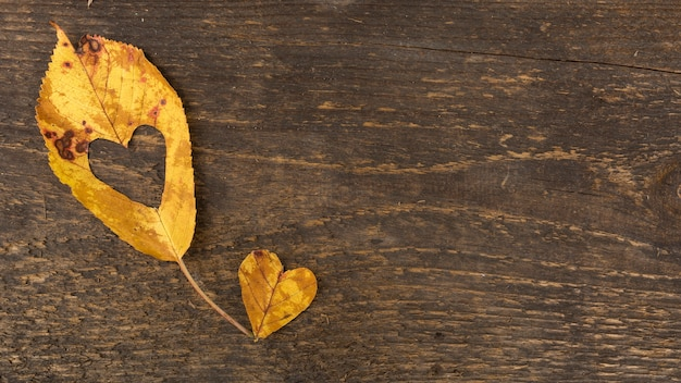 Top view heart shaped leaves on wooden background Free Photo