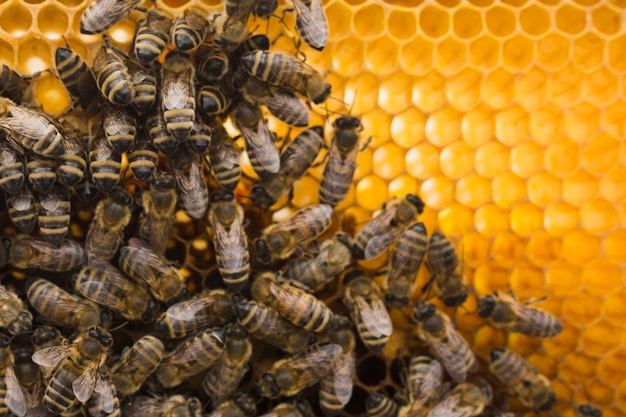 Top view honeycomb with bees Free Photo