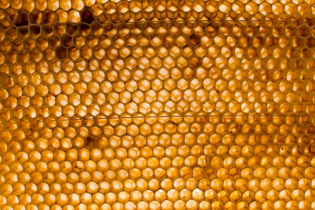 Top view honeycomb Free Photo