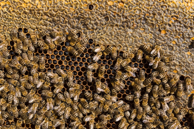 Top view honeycomb Free Photo