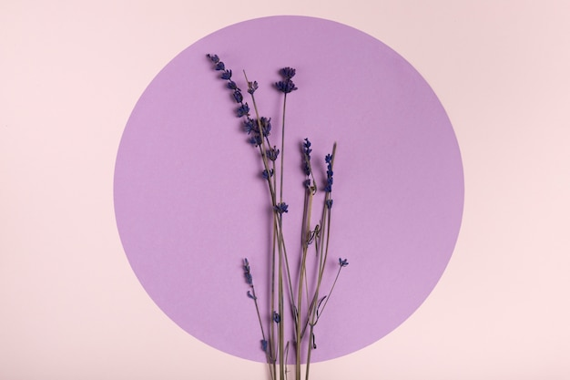 Top view lavender on paper circle concept Free Photo