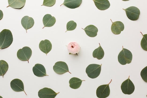 평면도 잎과 장미 배열 무료 사진