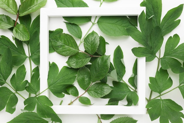 Top view of leaves frame concept with copy space Free Photo