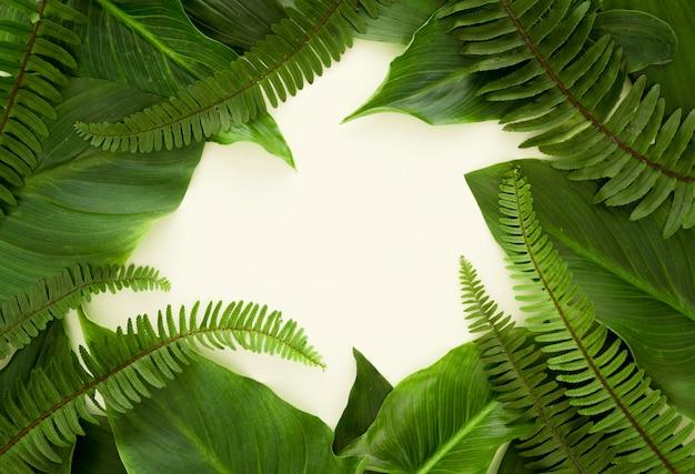 Vista dall'alto di un sacco di foglie e felci con copia spazio Foto Gratuite