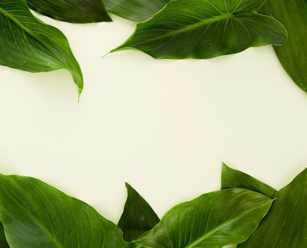Vista dall'alto di un sacco di foglie con copia spazio Foto Gratuite