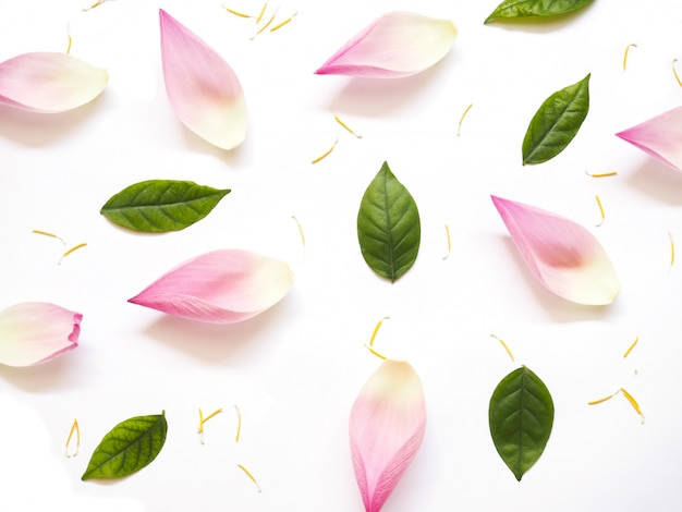 Top view of lotus petals with green leaves and yellow pollen on white Premium Photo