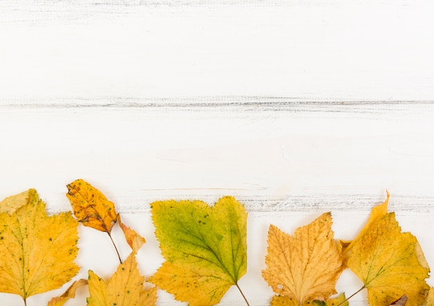 Top view minimalistic autumn leaves with copy space Free Photo