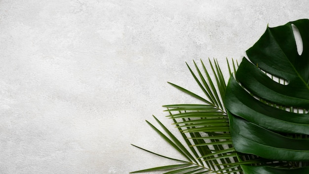 Top view of monstera and other leaves with copy space Free Photo
