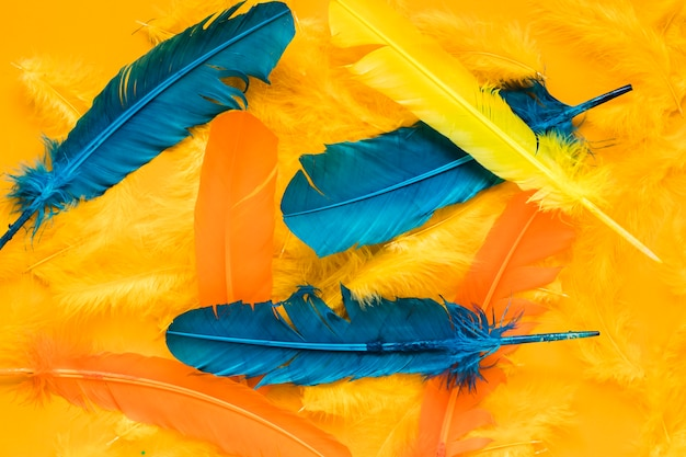 Top view of multicolored feathers for carnival Free Photo