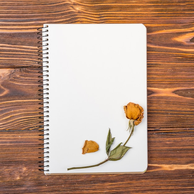 Top view notebook with dry flower on top Free Photo
