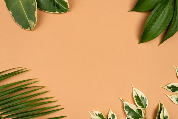복사 공간을 가진 식물 잎의 구색의 상위 뷰 무료 사진