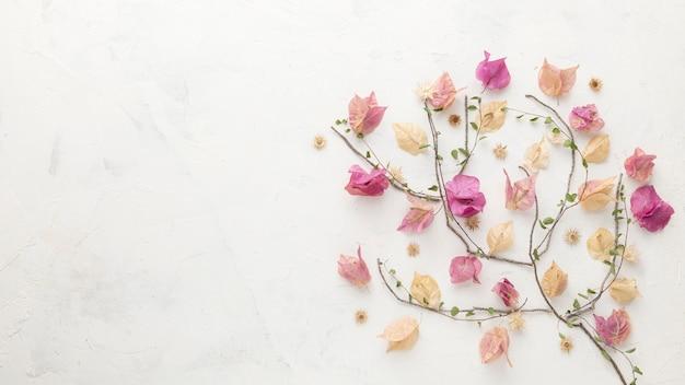 복사 공간 가을 꽃의 상위 뷰 프리미엄 사진