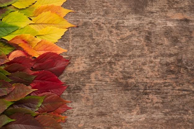가을의 상위 뷰 복사 공간 나뭇잎 무료 사진