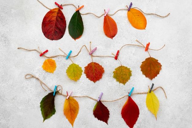 아름다운 가을의 상위 뷰 문자열에 나뭇잎 무료 사진