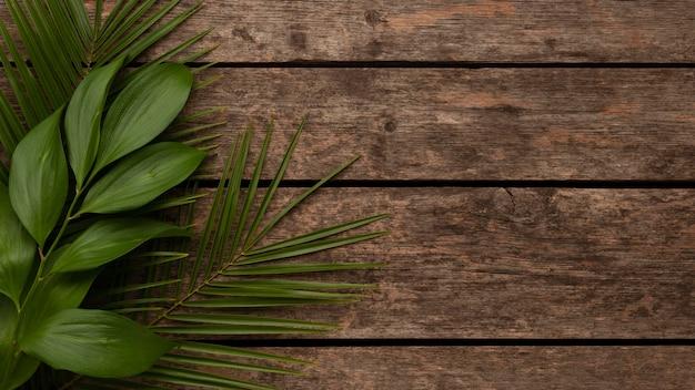 コピースペースと美しい植物の葉の上面図 無料写真
