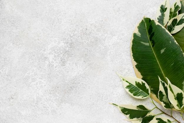 복사 공간이 아름다운 식물 잎의 평면도 무료 사진