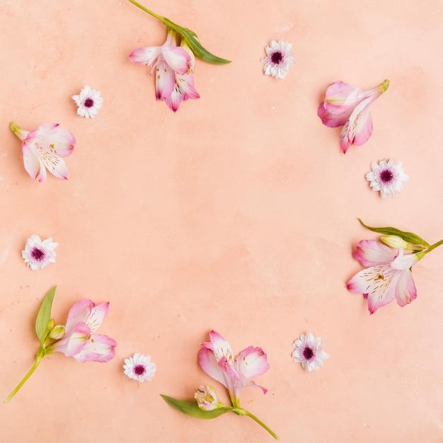 Вид сверху красивых весенних орхидей и ромашек Бесплатные Фотографии