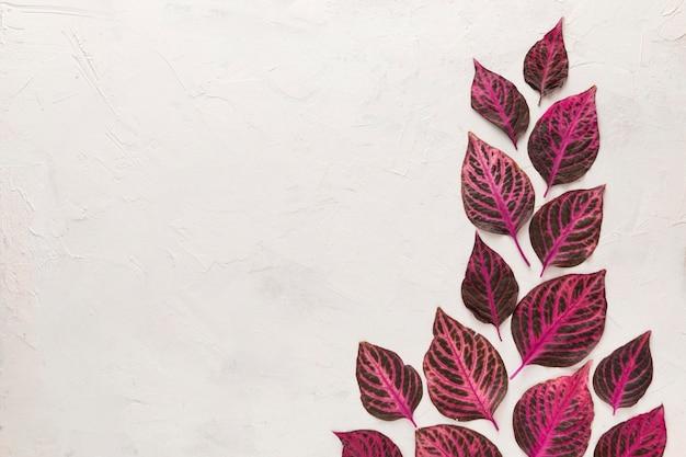 Вид сверху красиво окрашенных осенних листьев с копией пространства Бесплатные Фотографии