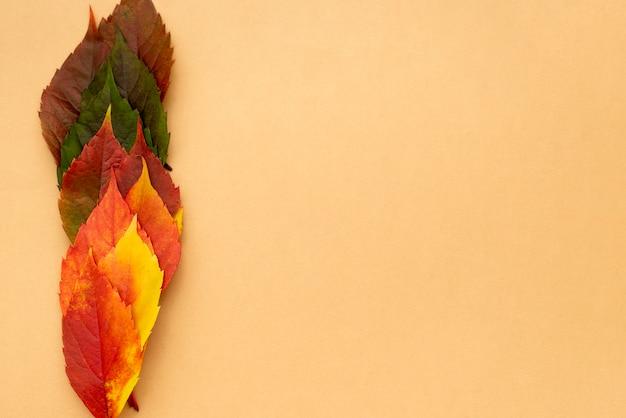 복사 공간이 아름답게 색깔의 단풍의 상위 뷰 무료 사진