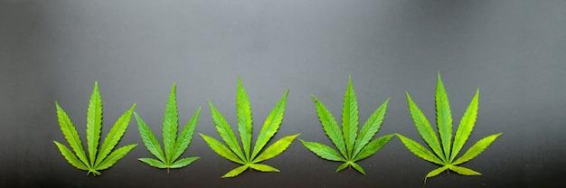 黒の背景に大麻の葉の上面図。マリファナの葉 Premium写真