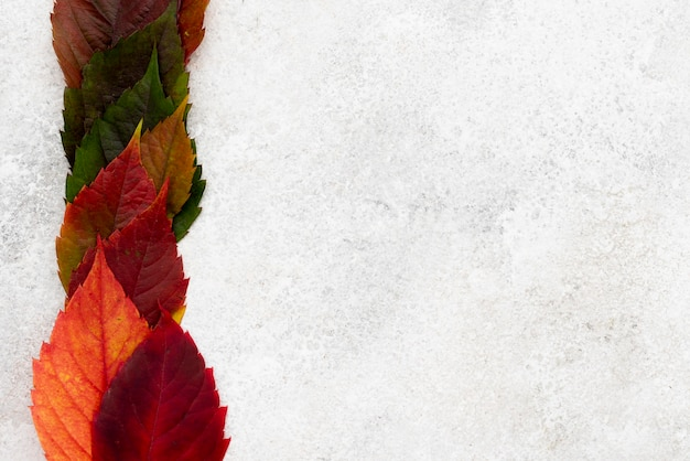 컬러 가을의 상위 뷰 복사 공간 나뭇잎 무료 사진