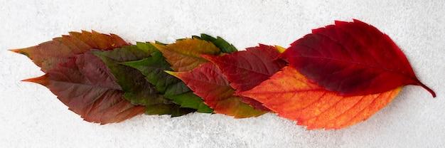 단풍 색깔의 상위 뷰 무료 사진