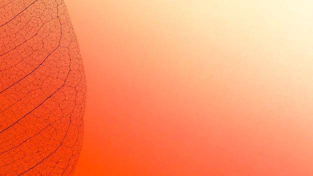 Вид сверху цветной полупрозрачной текстуры листовой пластинки Бесплатные Фотографии