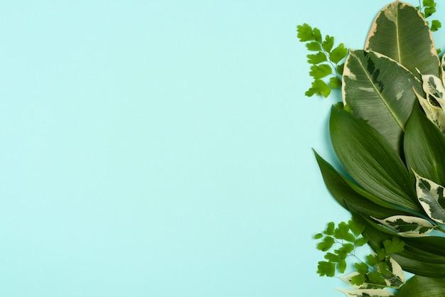 다른 식물의 평면도 복사 공간 나뭇잎 무료 사진