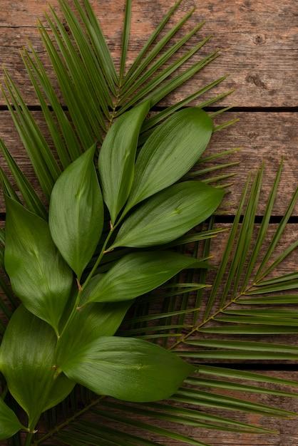 다른 식물 잎의 상위 뷰 무료 사진