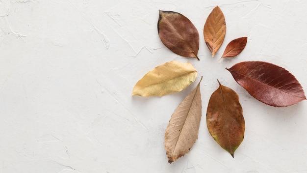 건조 가을의 상위 뷰 복사 공간 나뭇잎 무료 사진