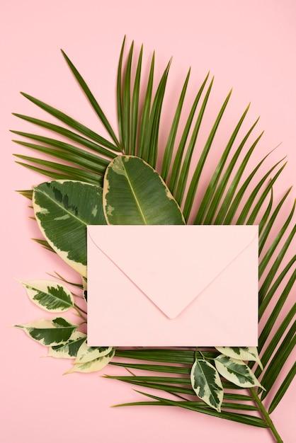 식물 잎에 봉투의 상위 뷰 무료 사진