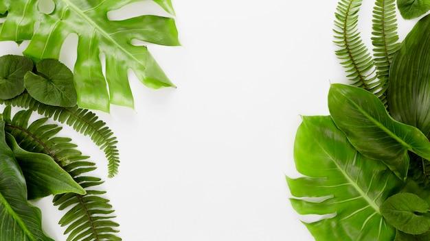 고사리와 다양한 잎 복사 공간의 평면도 프리미엄 사진