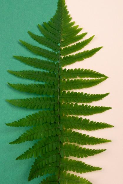 고사리 잎의 상위 뷰 무료 사진