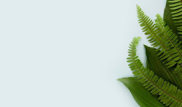 Вид сверху на листья папоротника с копией пространства Бесплатные Фотографии