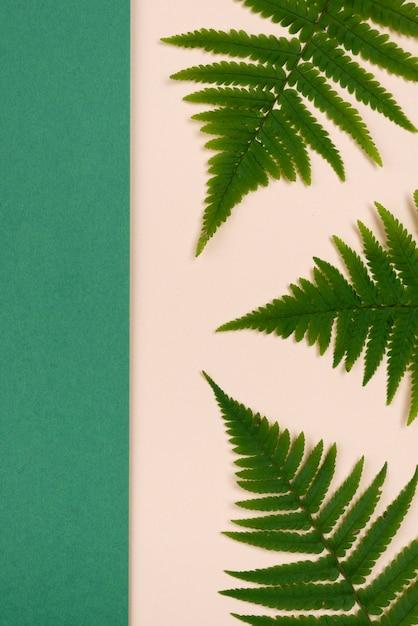 고 사리 잎의 상위 뷰 무료 사진