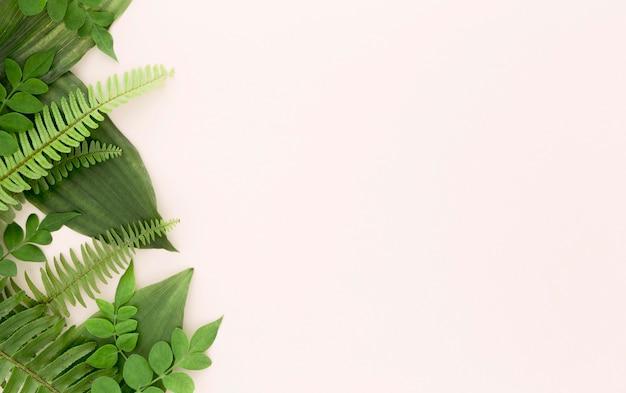 양치류와 잎 복사 공간의 상위 뷰 무료 사진