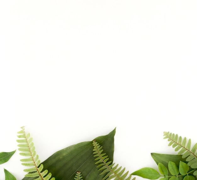 Вид сверху папоротников и листьев с копией пространства Premium Фотографии