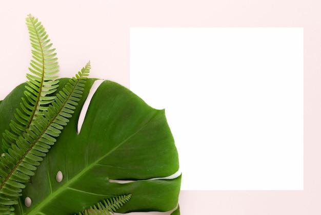 Вид сверху папоротников и листьев монстеры с копией пространства Бесплатные Фотографии