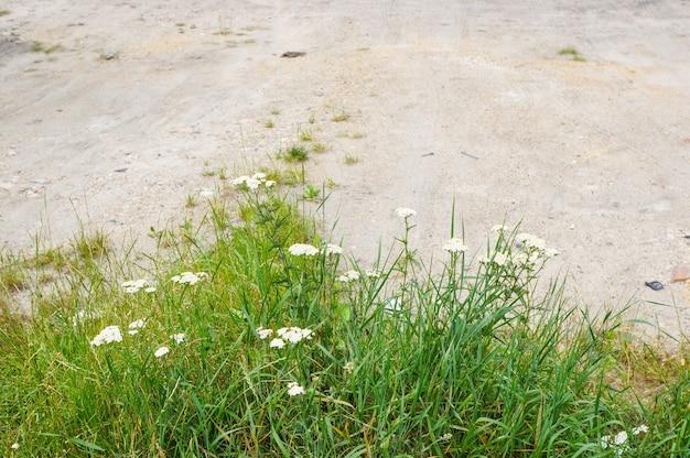 모래 바닥에 꽃과 잔디의 상위 뷰 무료 사진