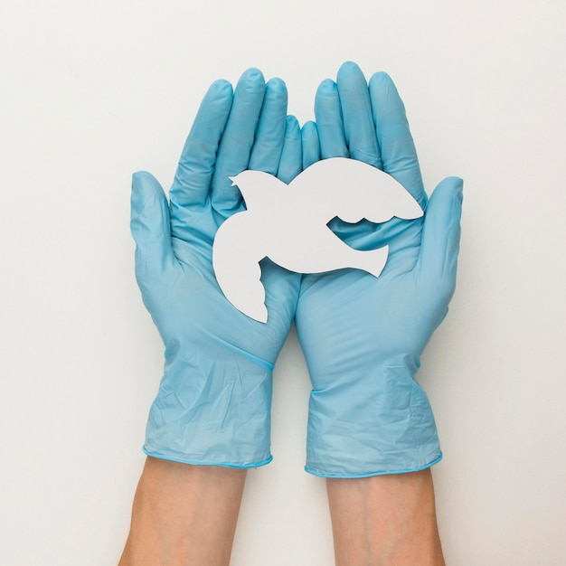 Вид сверху руки с перчатками, держа голубя Premium Фотографии